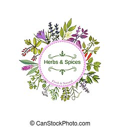Culinary herbs and spices. Hand drawn set. Vector...