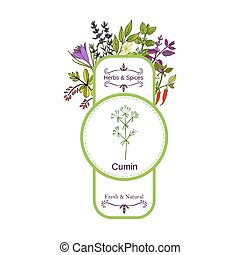 Vintage herbs and spices label collection. Cumin hand drawn...