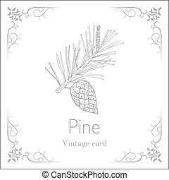 Pine branch with pine cone. Vintage card. Hand drawn...