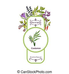 Vintage herbs and spices label collection. Cardamon hand...