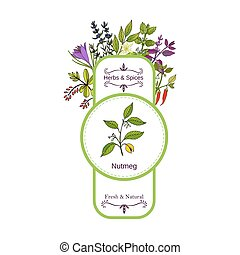 Vintage herbs and spices label collection. Nutmeg hand drawn...