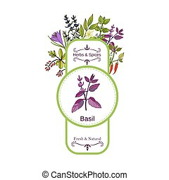 Vintage herbs and spices label collection. Basil hand drawn...