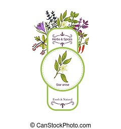 Vintage herbs and spices label collection. Star anise hand...