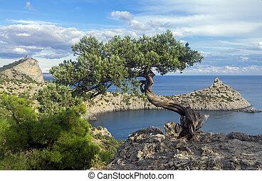 Relict juniper tree on a cliff above the sea. Crimea.