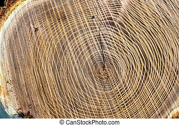 tree trunk - ovum-sectional area of tree trunk, symbol image...