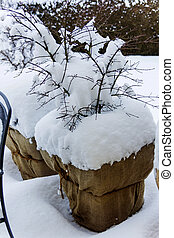 snowy planter in the garden, symbol photo for winter...