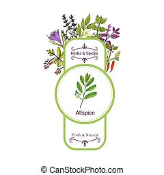 Vintage herbs and spices label collection. Allspice hand...