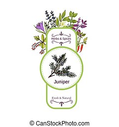 Vintage herbs and spices label collection. Juniper hand...