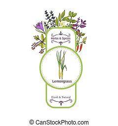 Vintage herbs and spices label collection. Lemongrass hand...