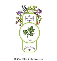 Vintage herbs and spices label collection. Parsley hand...