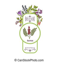 Vintage herbs and spices label collection. Sumac hand drawn...