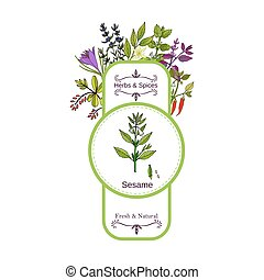 Vintage herbs and spices label collection. Sesame hand drawn...