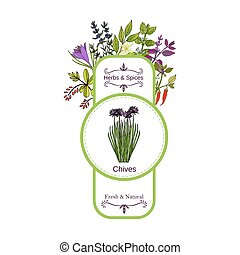 Vintage herbs and spices label collection. Chives hand drawn...