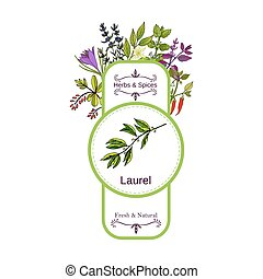 Vintage herbs and spices label collection. Vanilla hand...