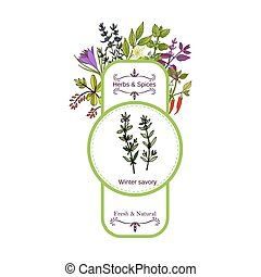 Vintage herbs and spices label collection. Winter savory...
