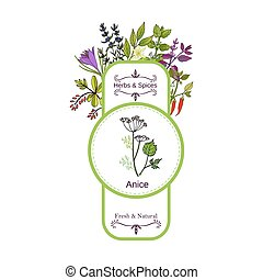 Vintage herbs and spices label collection. Anise hand drawn...