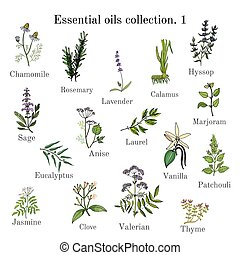 Set of essential oil plants. Hand drawn ector illustration -...