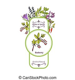 Vintage herbs and spices label collection. Berberis hand...