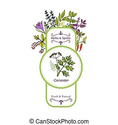 Vintage herbs and spices label collection. Coriander hand...