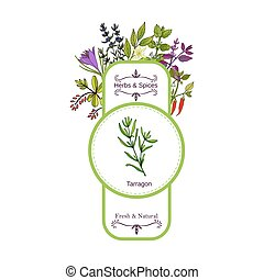 Vintage herbs and spices label collection. Tarragon hand...