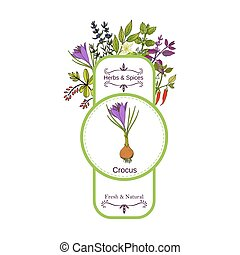 Vintage herbs and spices label collection. Crocus hand drawn...