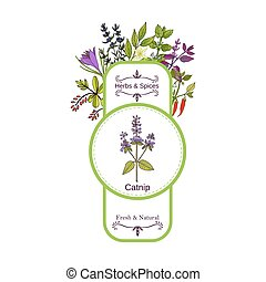 Vintage herbs and spices label collection. Catnip hand drawn...