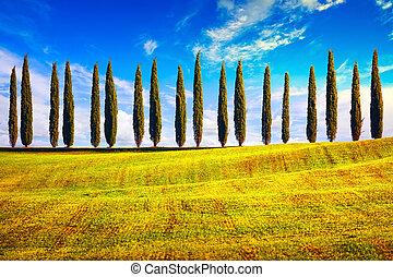krajobraz, Okolica, Włochy, cyprys,  Tuscany, Drzewa, Europa, hałas