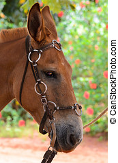 Brown horse with saddle. Close on the head of the animal.