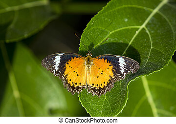 Image of butterfly perched on leaves on nature background....