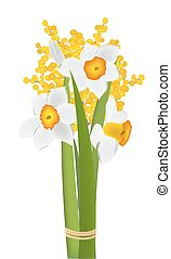 Daffodils and mimosa flowers - Daffodils and mimosa spring...