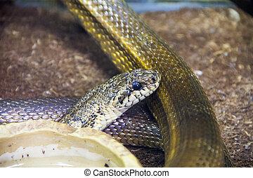 Dangerous snake in zoo