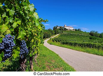 Rosazzo Abbey and vineyard in northern Italy