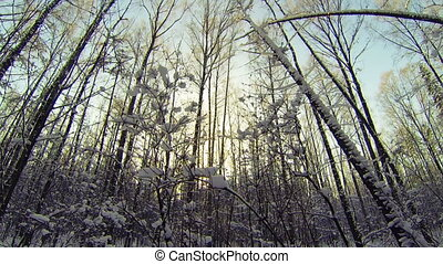 Winter Forest. wintertime, wonderland