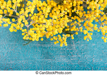 Mimosa in jar on table - Branch with flowers mimosa on blue...