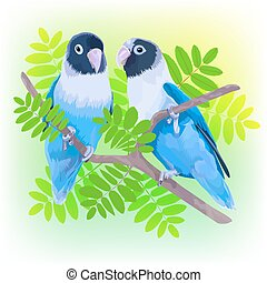 Pair of blue masked lovebirds