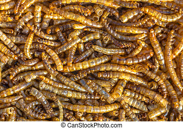 Dried mealworm larvae background suitable as food