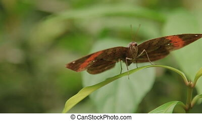 Butterfly having a rest on grass. Kuala Lumpur, Malaysia....