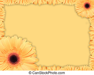 Greeting card with orange-yellow transvaal daisy flower -...