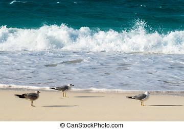 Relaxing Seagulls