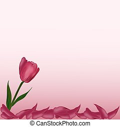pink flower Tulip petals on a  background