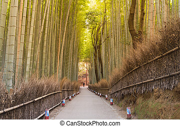 Walking path leading to bamboo Arashiyama bamboo forest