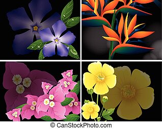 Four different kinds of flowers on black background...