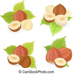 collection of hazelnuts for your design