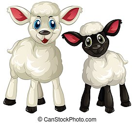 Two little lambs on white background illustration