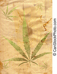 grunge paper with leaf of grass
