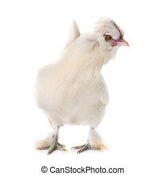 white Sultan chicken - Sultan chicken in front of white...