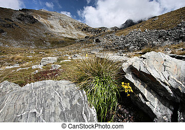 The Remarkables. Rugged mountains and yellow flowers in New...