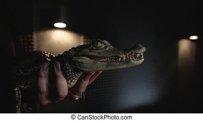 Man holding a small crocodile