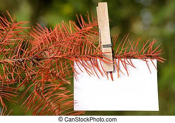 Dead tree - Blank card pinned on a branch of dead tree....