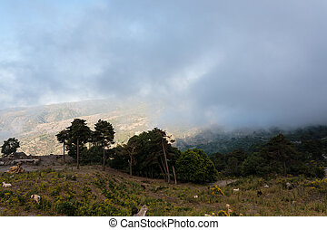 upland pasture in Etna region of Sicily - travel to Italy -...